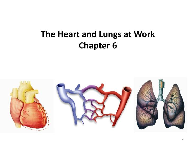 the heart and lungs at work chapter 6 n.