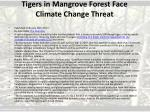 tigers in mangrove forest face climate change threat