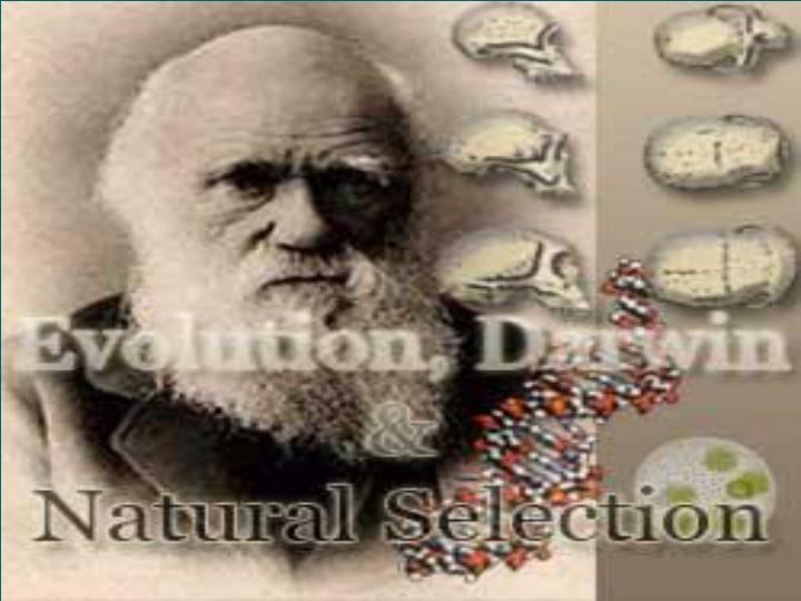 darwin evolution and natural selection n.