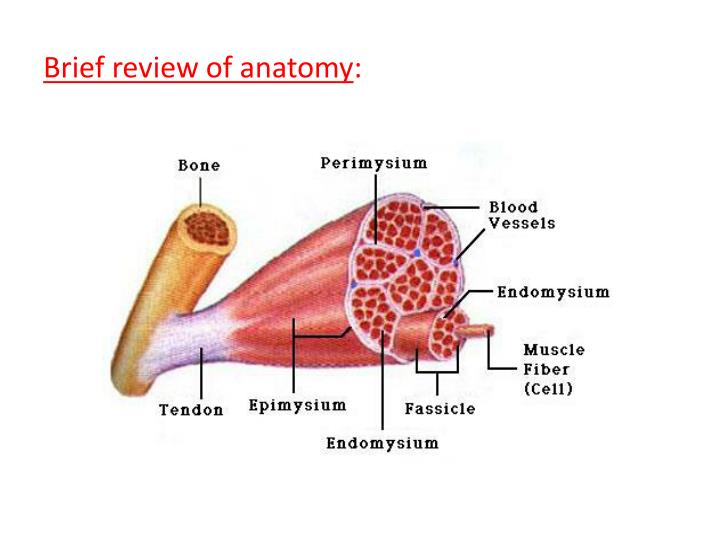 Brief review of anatomy