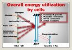 overall energy utilization by cells1