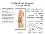 total spinal cord transection