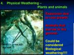 physical weathering plants and animals