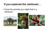 if you explored the rainforest