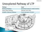 unexplored pathway of ltp1