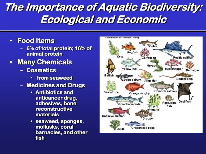 The Importance of Aquatic Biodiversity: