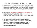 sensory motor network
