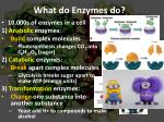 what do enzymes do