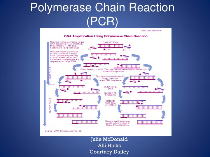polymerase chain reaction pcr n.