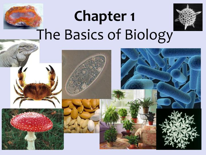 chapter 1 the basics of biology n.