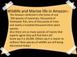 wildlife and marine life in amazon