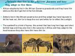 animals that live in the african savanna and how they adapt to live there