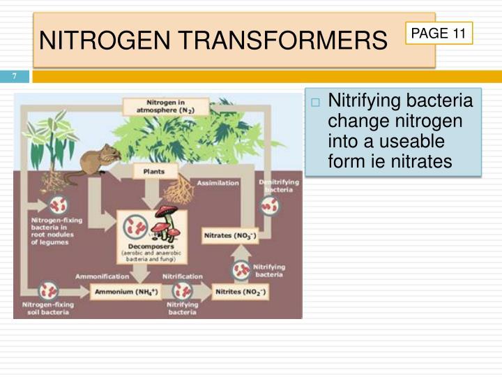 NITROGEN TRANSFORMERS