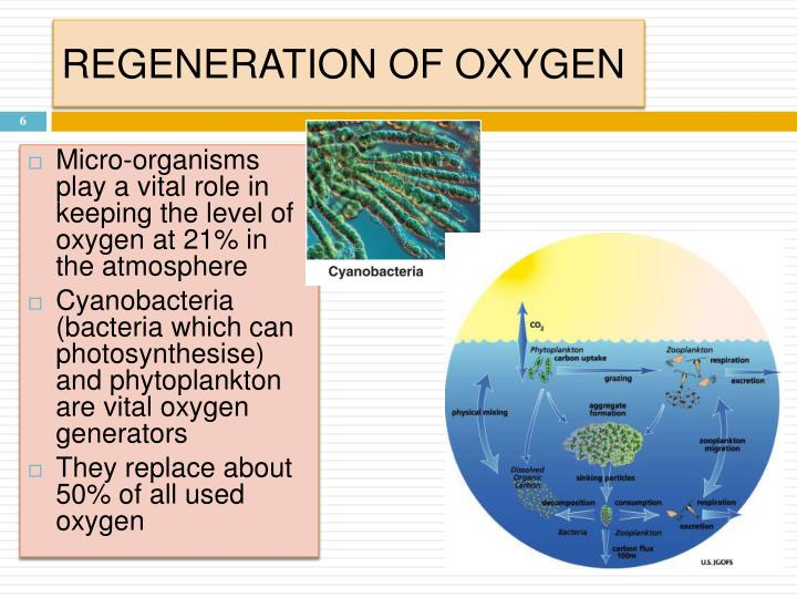REGENERATION OF OXYGEN