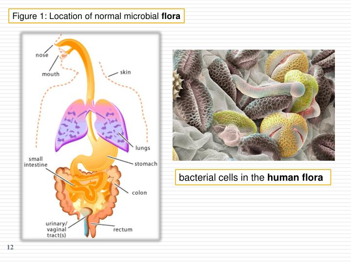 Figure 1: Location of normal microbial