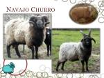 navajo churro