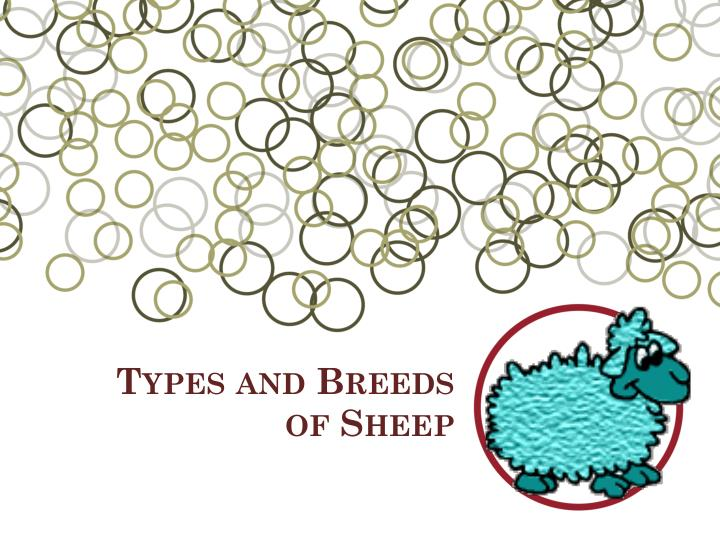 types and breeds of sheep n.