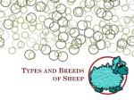 types and breeds of sheep