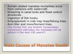 main causes of manatee death