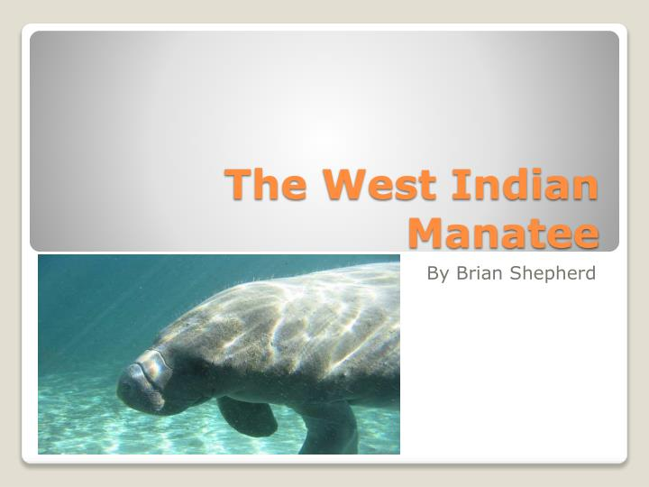 the west indian manatee n.