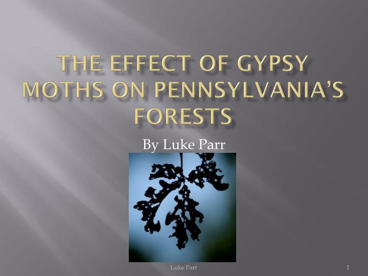 the effect of gypsy moths on pennsylvania s forests n.