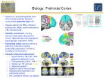 biology prefrontal cortex