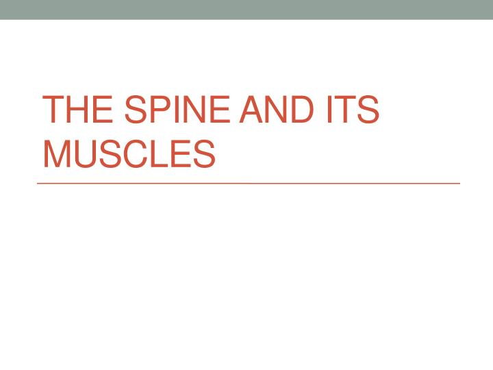the spine and its muscles n.