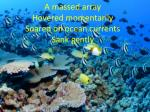 a massed array hovered momentarily soared on ocean currents sank gently
