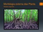 morfologia externa das planta13