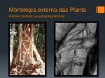morfologia externa das planta14
