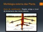morfologia externa das planta7