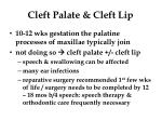 cleft palate cleft lip