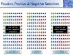 fixation positive negative selection