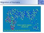 migration of humans2