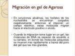 migraci n en gel de agarosa