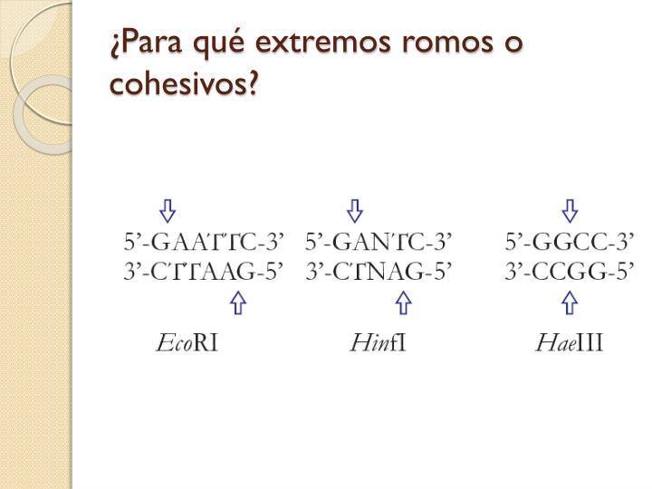 ¿Para qué extremos romos o cohesivos?