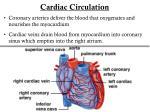 cardiac circulation