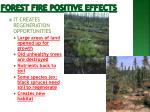 forest fire positive effects