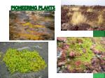 pioneering plants