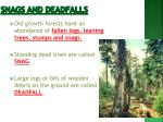 snags and deadfalls