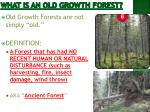 what is an old growth forest