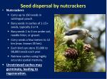 seed dispersal by nutcrackers
