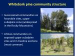 whitebark pine community structure