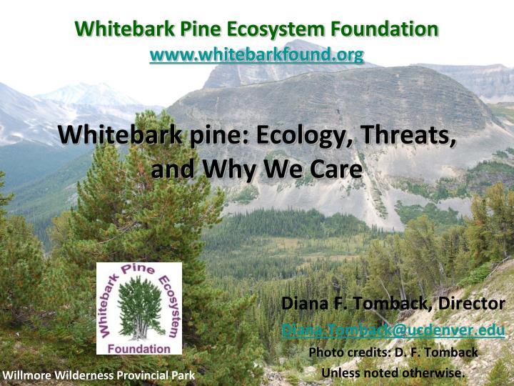 whitebark pine ecology threats and why we care n.