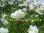 2 bloom where you re planted