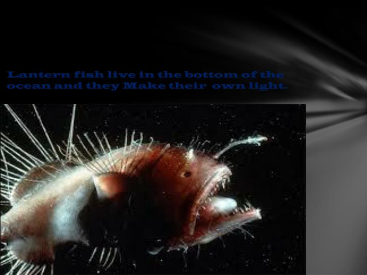 Lantern fish live in the bottom of the ocean and they Make their  own light.