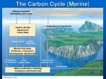 the carbon cycle marine