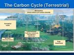 the carbon cycle terrestrial