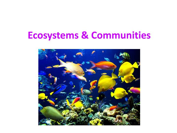 ecosystems communities n.
