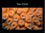 star coral